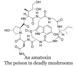 Amatoxin, Deathcap, Mushrooms